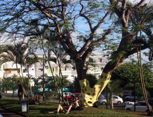 Un arbre étrange
